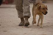 Dog Walking Posters - A Military Working Dog And His Handler Poster by Stocktrek Images