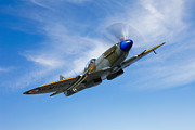 Spitfire Posters - A Supermarine Spitfire Mk-18 In Flight Poster by Scott Germain