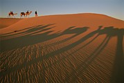 Ethnic And Tribal Peoples Framed Prints - A Tuareg Tribesman Leads His Camels Framed Print by Carsten Peter