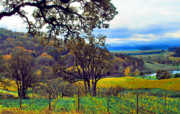 Vino Prints - A Yamhill County Vineyard Print by Margaret Hood