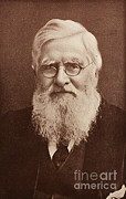 Expert Posters - Alfred Russel Wallace, Welsh Naturalist Poster by Science Source
