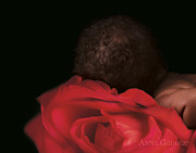 Red Flower Posters - Amaya in Rose Poster by Anne Geddes