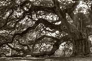 Angel Oak Live Oak Tree Print by Dustin K Ryan