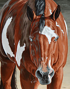 Pinto Horse Paintings - Apollo by Lesley Alexander