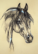 Horse Drawing Pastels Posters - Arabian horse sketch Poster by Angel  Tarantella