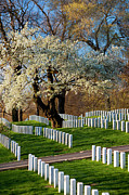 Grave Photos - Arlington National Cemetary by Brian Jannsen
