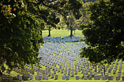 Repetition Photos - Arlington National Cemetery, Arlington by Terry Moore