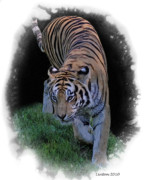 Asian Tiger Framed Prints - Asian Tiger Framed Print by Larry Linton