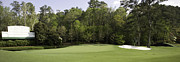 Golf Photos Framed Prints - Augusta National 11 White Dogwood Masters Photo Framed Print by Phil Reich