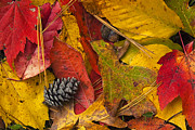 Leaf Collage Prints - Autumn Colors Print by Andrew Soundarajan