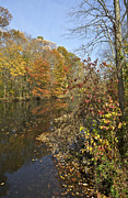 Colorful Bark Prints - Autumn Colors on the Canal Print by David Letts
