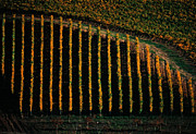 Chianti Framed Prints - Autumn in Chianti Framed Print by Franco Franceschi
