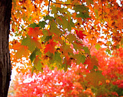 Autumn Photo Prints - Autumn Leaves Print by Rona Black