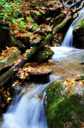 Trout Photo Posters - Autumn Mountain Stream Poster by Thomas R Fletcher