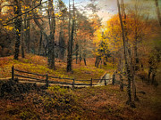 Fence Line Prints - Autumn Trail Print by Jessica Jenney