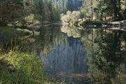 Spring Views Framed Prints - Autumn View Along The Merced River Framed Print by Marc Moritsch