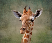 Baby Digital Art - Baby giraffe by Louise Heusinkveld
