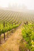 Wine Vineyard Photos - Beautiful Lush Grape Vineyard by Andy Dean