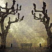 Sycamore Framed Prints - Bench Under Plane Trees Framed Print by Joana Kruse