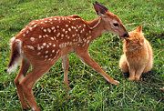 Whitetail Digital Art - Best Friends by Thomas R Fletcher