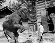 1900s Portraits Photos - Bill Snyder, Elephant Trainer by Everett