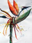 Paradise Drawings Posters - Bird of Paradise Poster by Mindy Newman