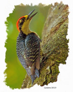 Woodpecker Digital Art Posters - Black-cheeked Woodpecker Poster by Larry Linton