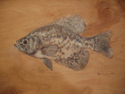 Crappie Prints - Black Crappie Print by Robert Cunningham