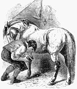 Farrier Prints - Blacksmith, 19th Century Print by Granger