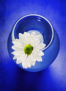 Decorative Floral Acrylic Prints - Blue Acrylic Print by Darren Fisher