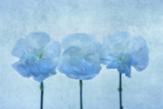 Carnations Prints - Blue on Blue Print by Rebecca Cozart