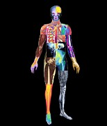 X-ray Image Art - Body Imaging by Mehau Kulyk