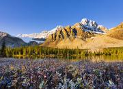 Autumn Foliage Prints - Bow Lake And Crowfoot Mountain Print by Yves Marcoux