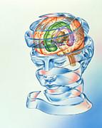 Brain Limbic System Print by John Bavosi