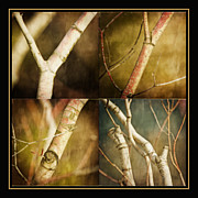 Photo Collage Prints - Branching Out Print by Bonnie Bruno