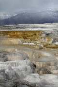 Canary Metal Prints - Canary Hot Springs Yellowstone Metal Print by Pierre Leclerc
