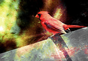 Cardinals Mixed Media - Cardinal  by Elaine Manley
