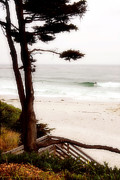 Overcast Art - Carmel Treat by Ron Regalado