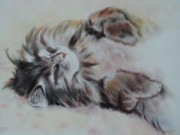 Sleeping Pastels Prints - Cat Nap Print by Carla Carson