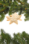 Icing Sugar Photos - Christmas Cookies Decorated With Real Tree Branches by Ulrich Schade