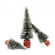 Fir Trees Photos - Christmas decoration by Bernard Jaubert