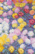 Signed Framed Prints - Chrysanthemums Framed Print by Claude Monet