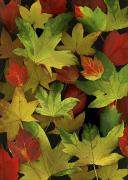 Red Leaves Acrylic Prints - Colorful Autumn Leaves Acrylic Print by Deddeda