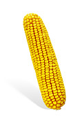 Sweet Corn Farm Prints - Corn Cob Print by Carlos Caetano
