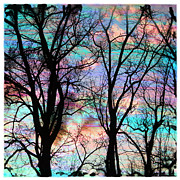 Bare Trees Mixed Media Metal Prints - Cotton candy sunrise Metal Print by Gina Signore