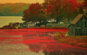 Waterway Digital Art - Cranberry Farm by Gina Cormier