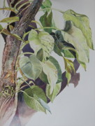 Sri Lankan Artist Paintings - Creepers by Sasitha Weerasinghe