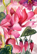 Garden Drawings - Cyclamen by Mindy Newman