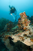 Wreck Prints - Diver Exploring The Cross Wreck Print by Matthew Oldfield