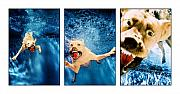 Golden Lab Prints - Dog Underwater Series Print by Jill Reger